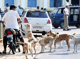 Canadians flock to adopt stray dogs from India | South Asian